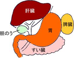 すい臓の図・写真・イラスト