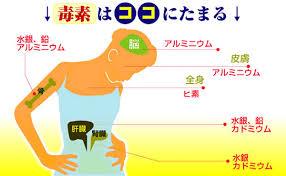 夏バテ予防には内臓のデトックスが効果的