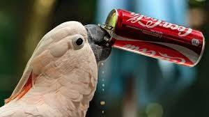 依存・中毒性のある人工甘味料はダイエットの敵