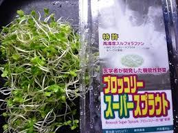 ブロッコリースーパースプラウトは病気を予防する万能野菜