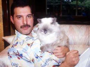 世界の愛猫家有名人